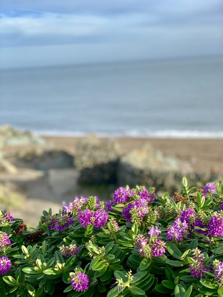 lovely flowers along the sea