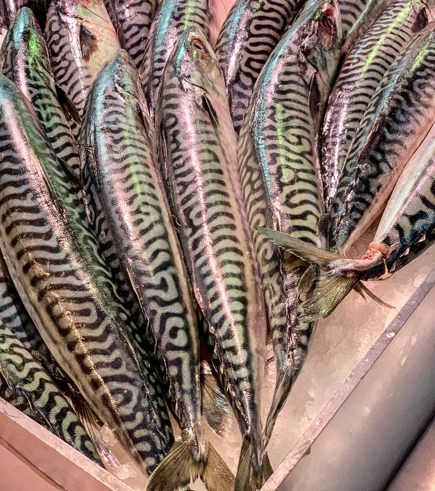 photo of mackerel at English market